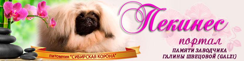 http://puppy-mini.narod.ru/portal/galzi.jpg